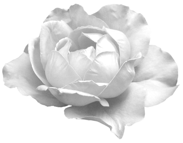 Dessin Fleur Blanche Acpimmo